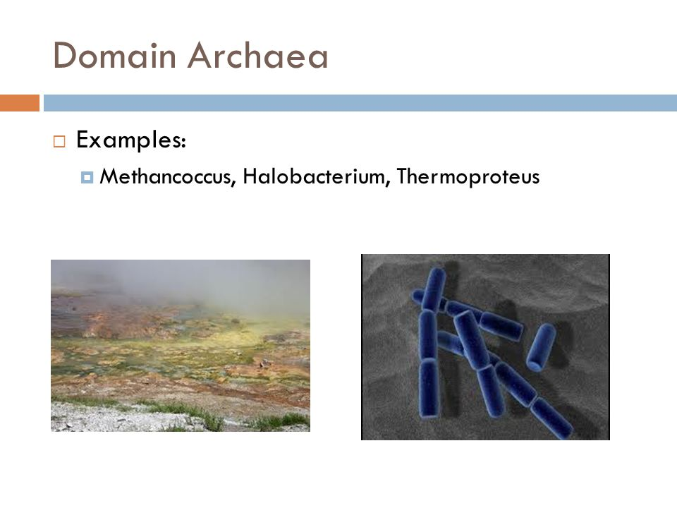 Domain Archaea Examples: Methancoccus, Halobacterium, Thermoproteus