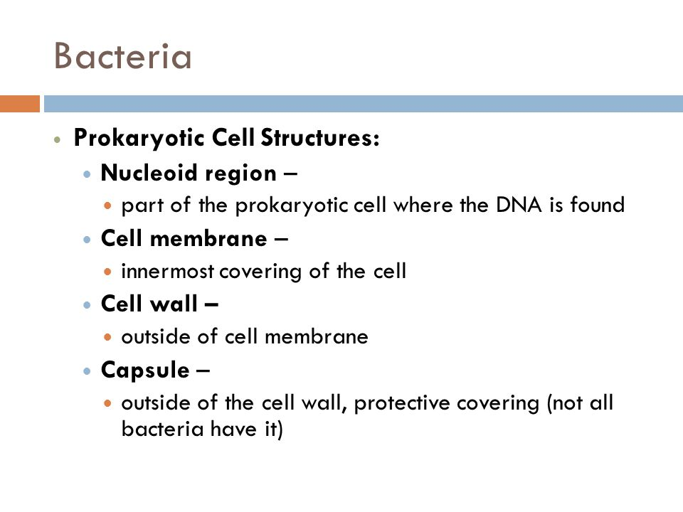 Bacteria Prokaryotic Cell Structures: Nucleoid region –