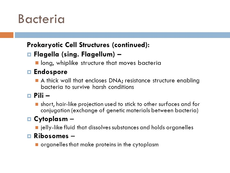 Bacteria Prokaryotic Cell Structures (continued):