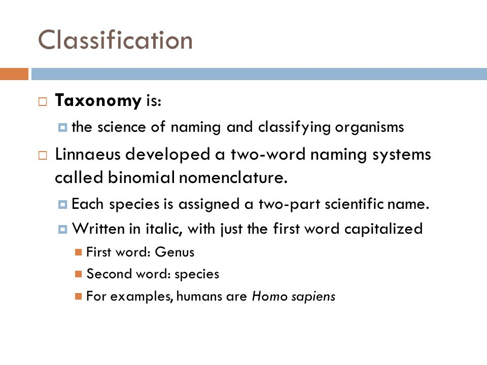 Classification Taxonomy is: