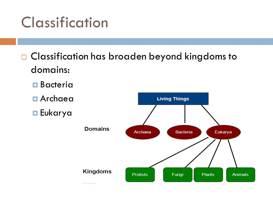 Classification Classification has broaden beyond kingdoms to domains: