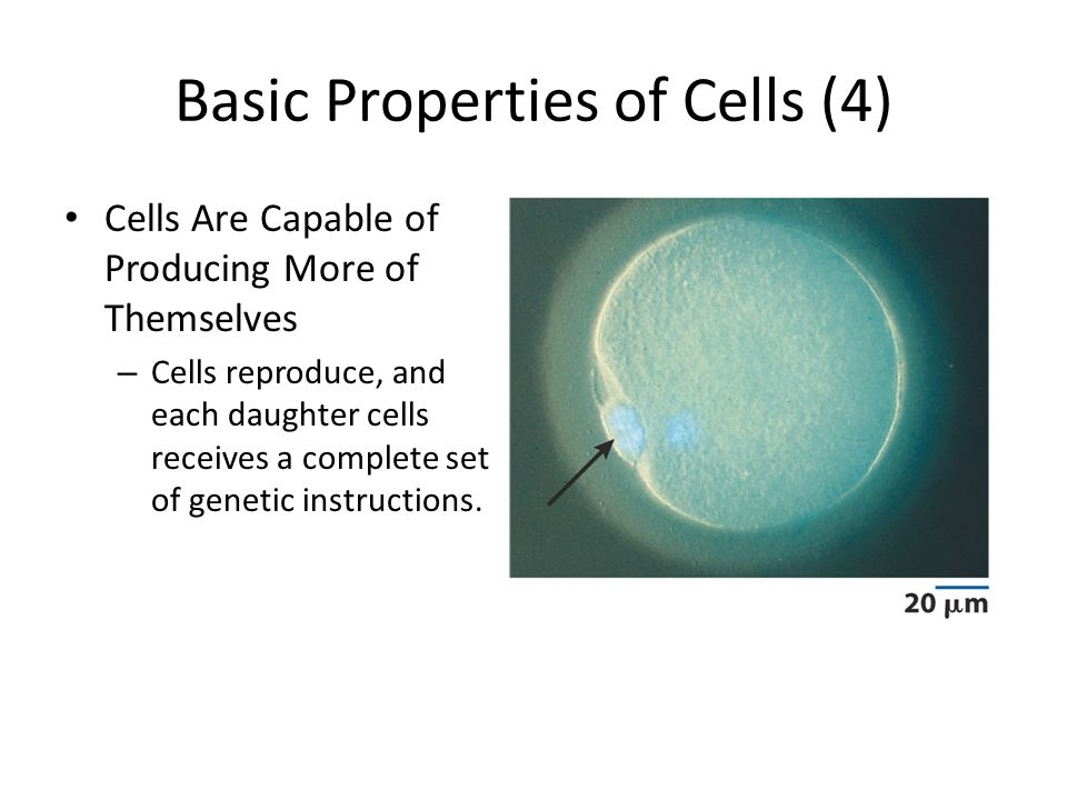 Basic Properties of Cells (4)