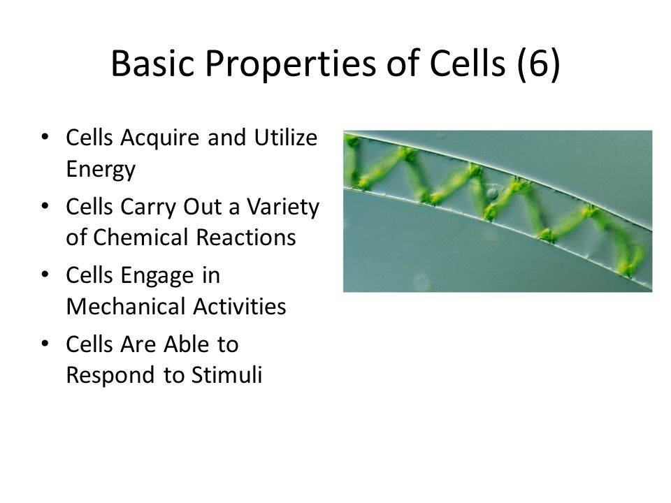 Basic Properties of Cells (6)