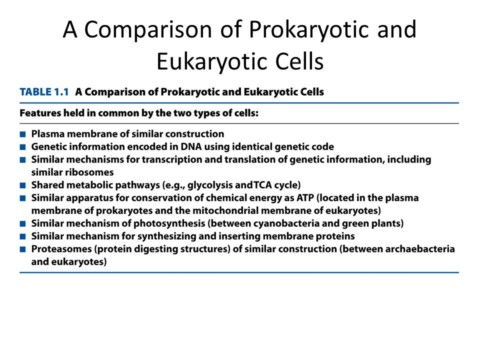 A Comparison of Prokaryotic and Eukaryotic Cells