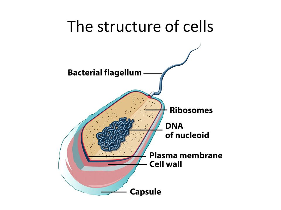 The structure of cells