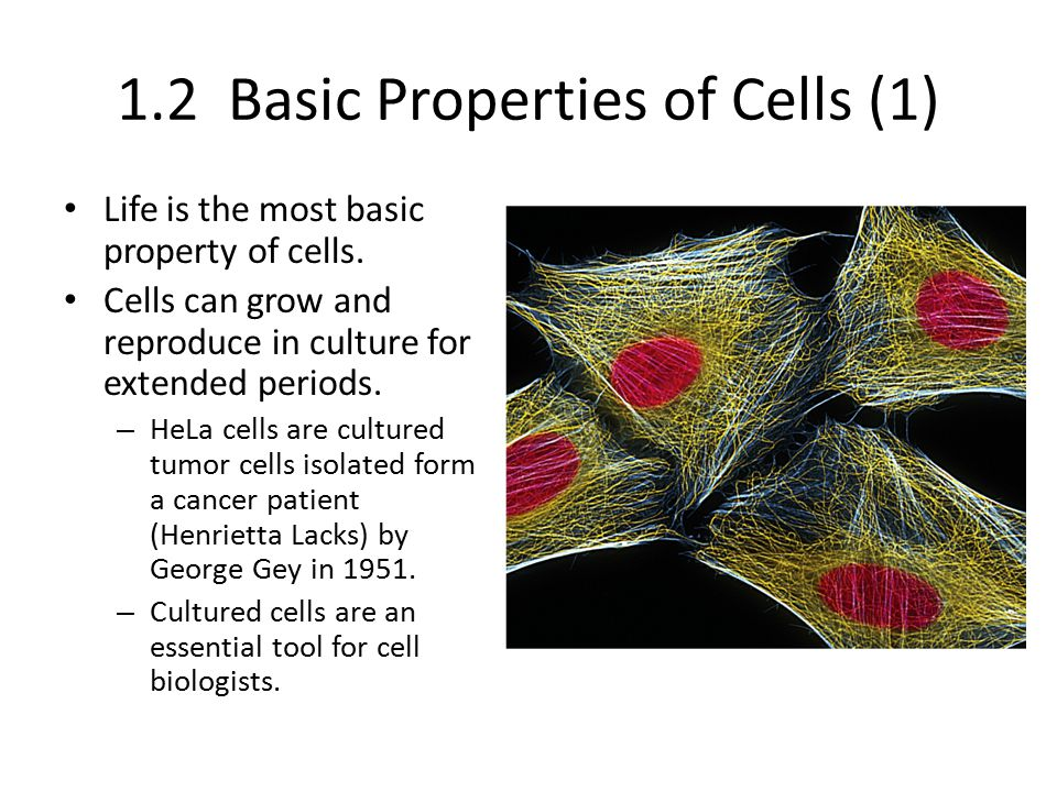 1.2 Basic Properties of Cells (1)