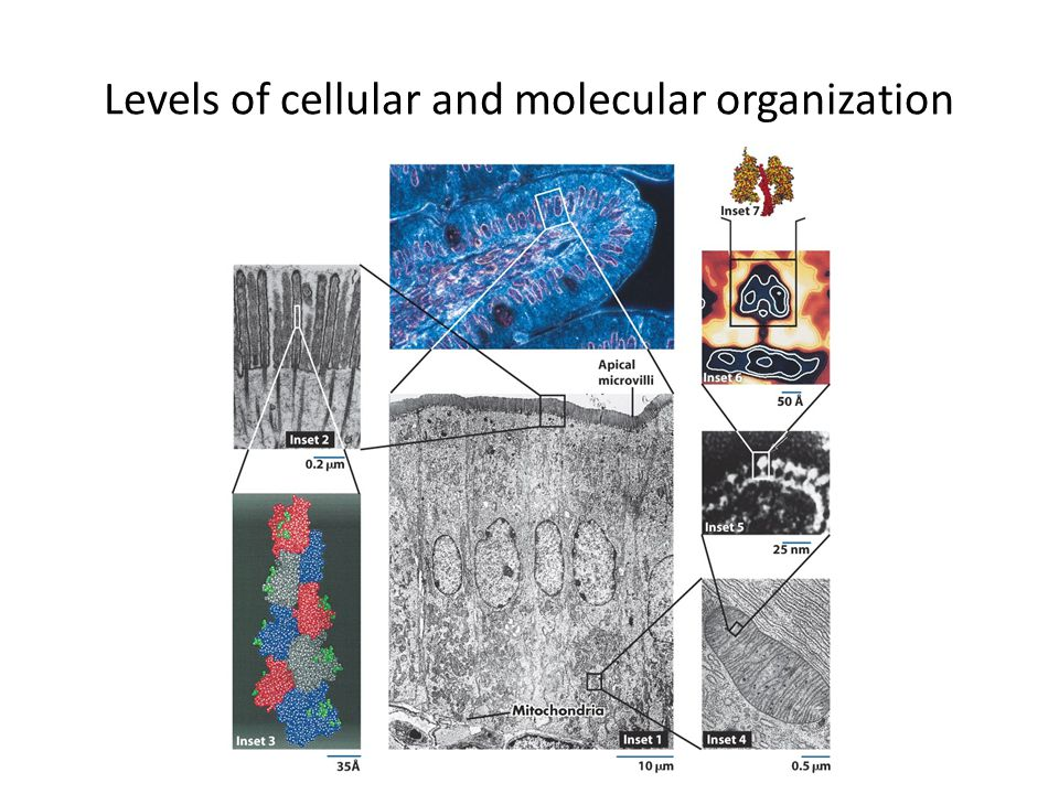 Levels of cellular and molecular organization