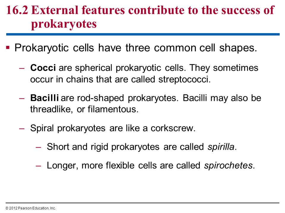 16.2 External features contribute to the success of prokaryotes