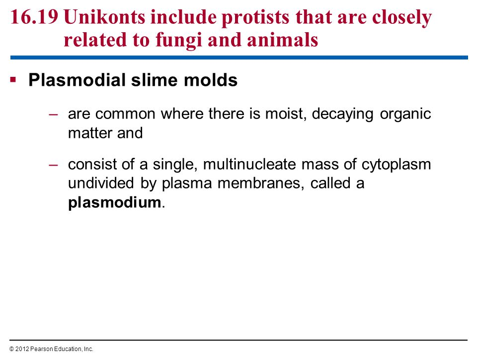 16.19 Unikonts include protists that are closely related to fungi and animals