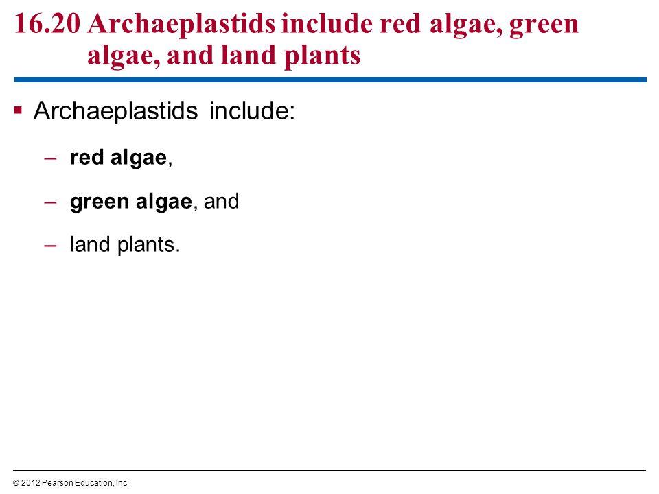 16.20 Archaeplastids include red algae, green algae, and land plants