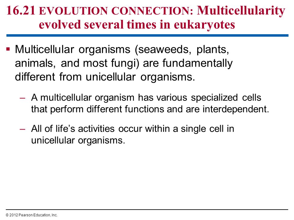 16.21 EVOLUTION CONNECTION: Multicellularity evolved several times in eukaryotes