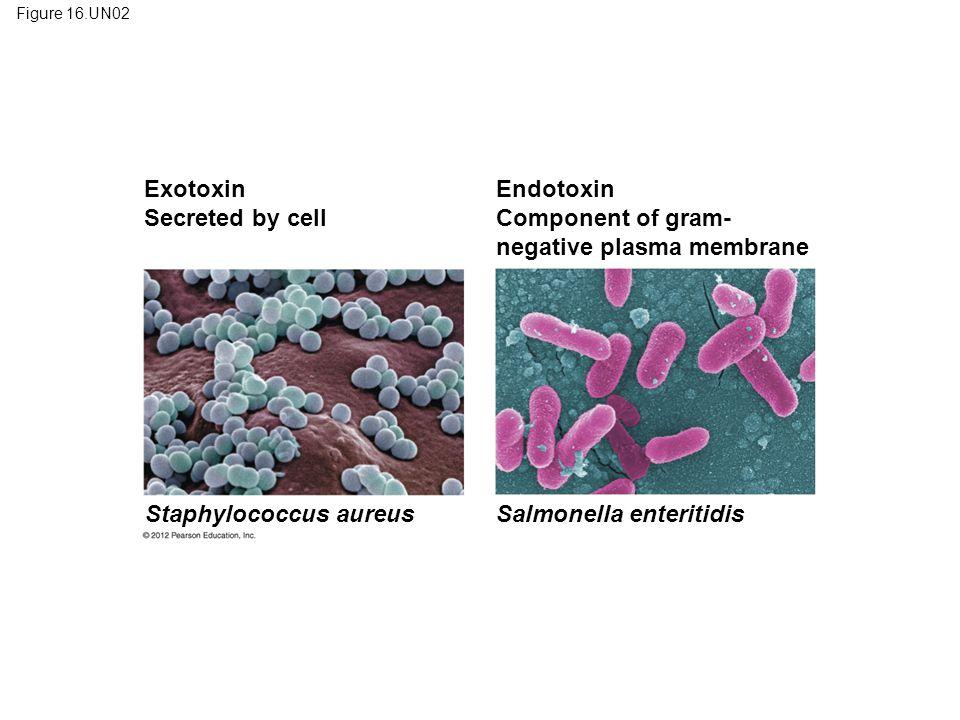 negative plasma membrane