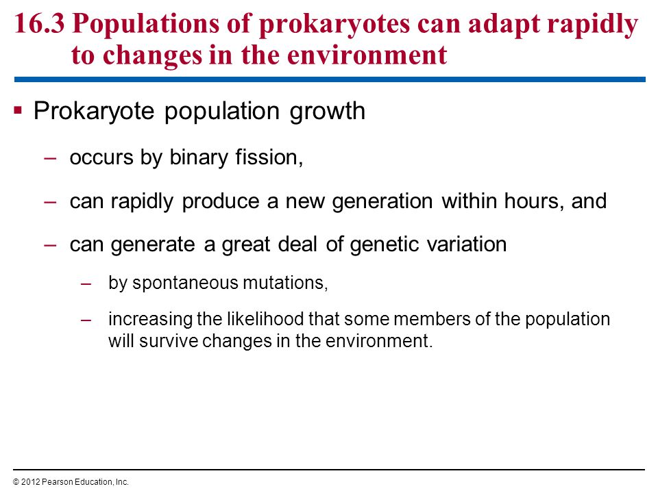 16.3 Populations of prokaryotes can adapt rapidly to changes in the environment