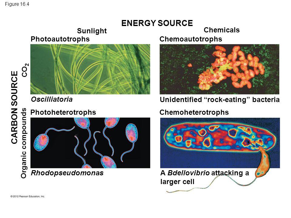 ENERGY SOURCE CARBON SOURCE Sunlight Chemicals Photoautotrophs