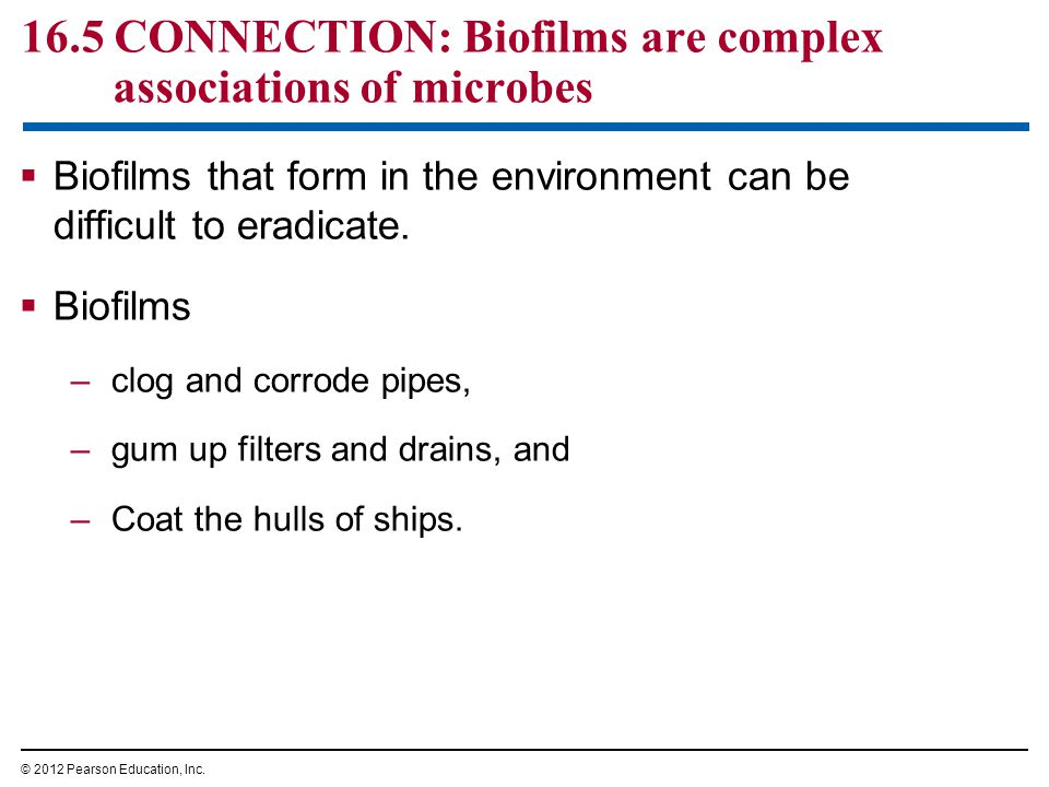 16.5 CONNECTION: Biofilms are complex associations of microbes