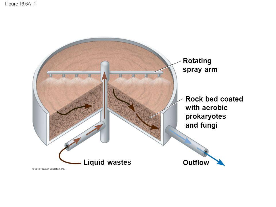 Rotating spray arm Rock bed coated with aerobic prokaryotes and fungi