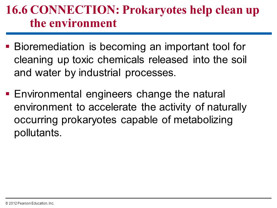 16.6 CONNECTION: Prokaryotes help clean up the environment