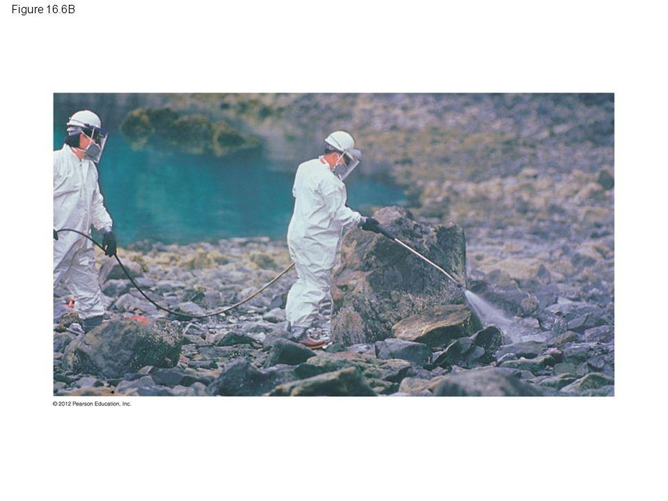 Figure 16.6B Figure 16.6B Treatment of an oil spill in Alaska 46