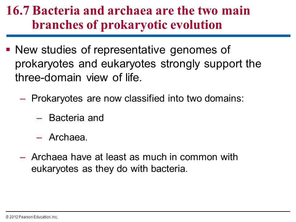 16.7 Bacteria and archaea are the two main branches of prokaryotic evolution