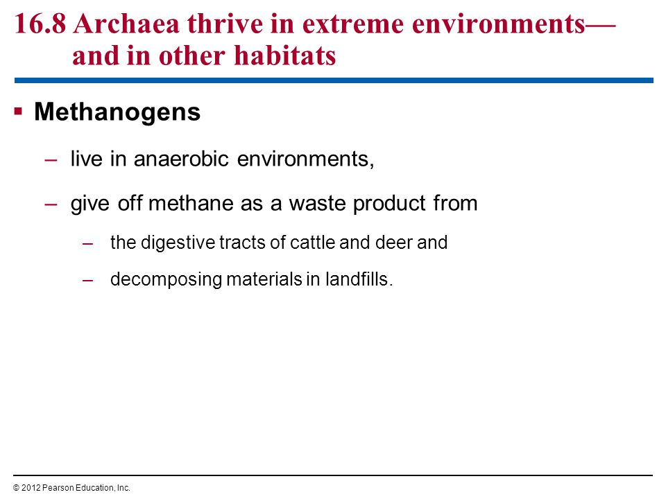 16.8 Archaea thrive in extreme environments—and in other habitats