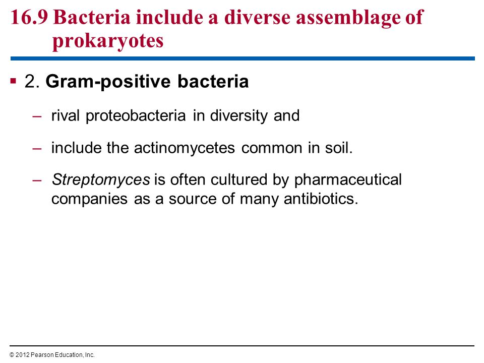 16.9 Bacteria include a diverse assemblage of prokaryotes