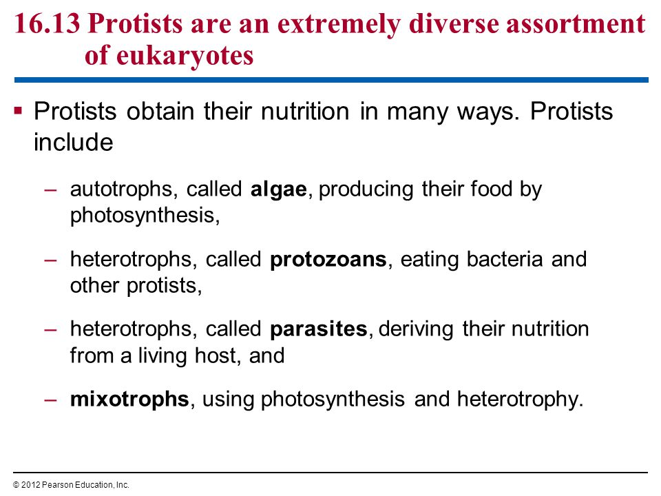 16.13 Protists are an extremely diverse assortment of eukaryotes