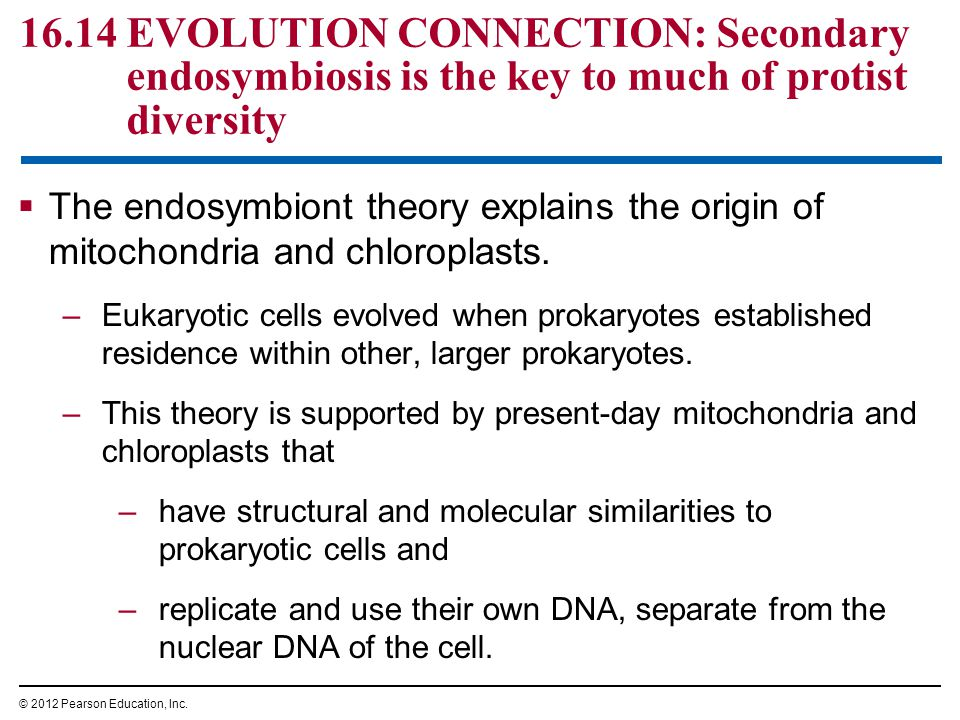 16.14 EVOLUTION CONNECTION: Secondary endosymbiosis is the key to much of protist diversity