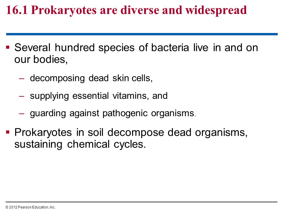 16.1 Prokaryotes are diverse and widespread