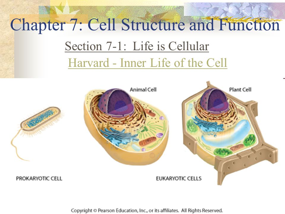 chapter 7: cell structure and function