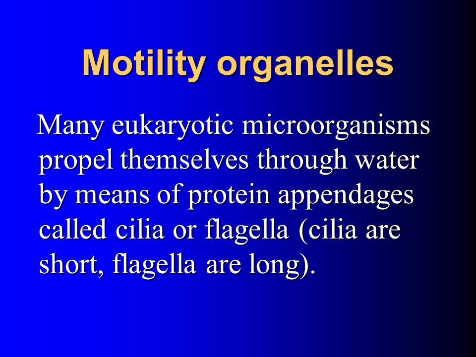 Motility organelles