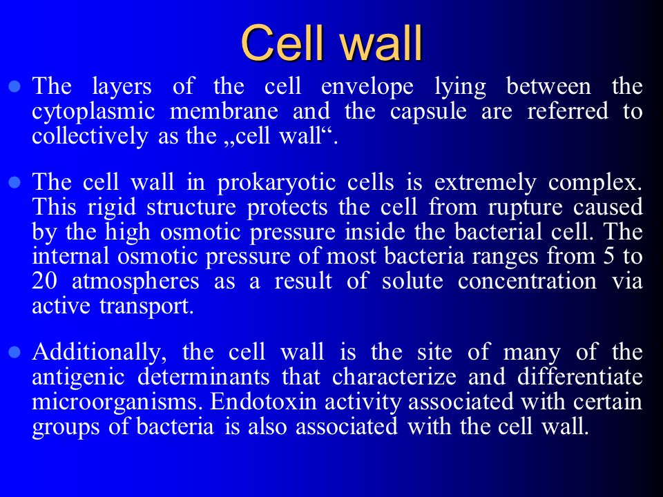 "Cell wall The layers of the cell envelope lying between the cytoplasmic membrane and the capsule are referred to collectively as the ""cell wall ."