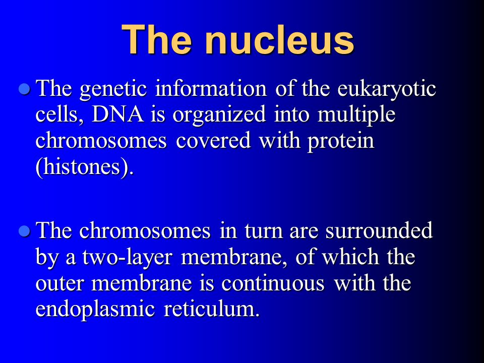 The nucleus The genetic information of the eukaryotic cells, DNA is organized into multiple chromosomes covered with protein (histones).