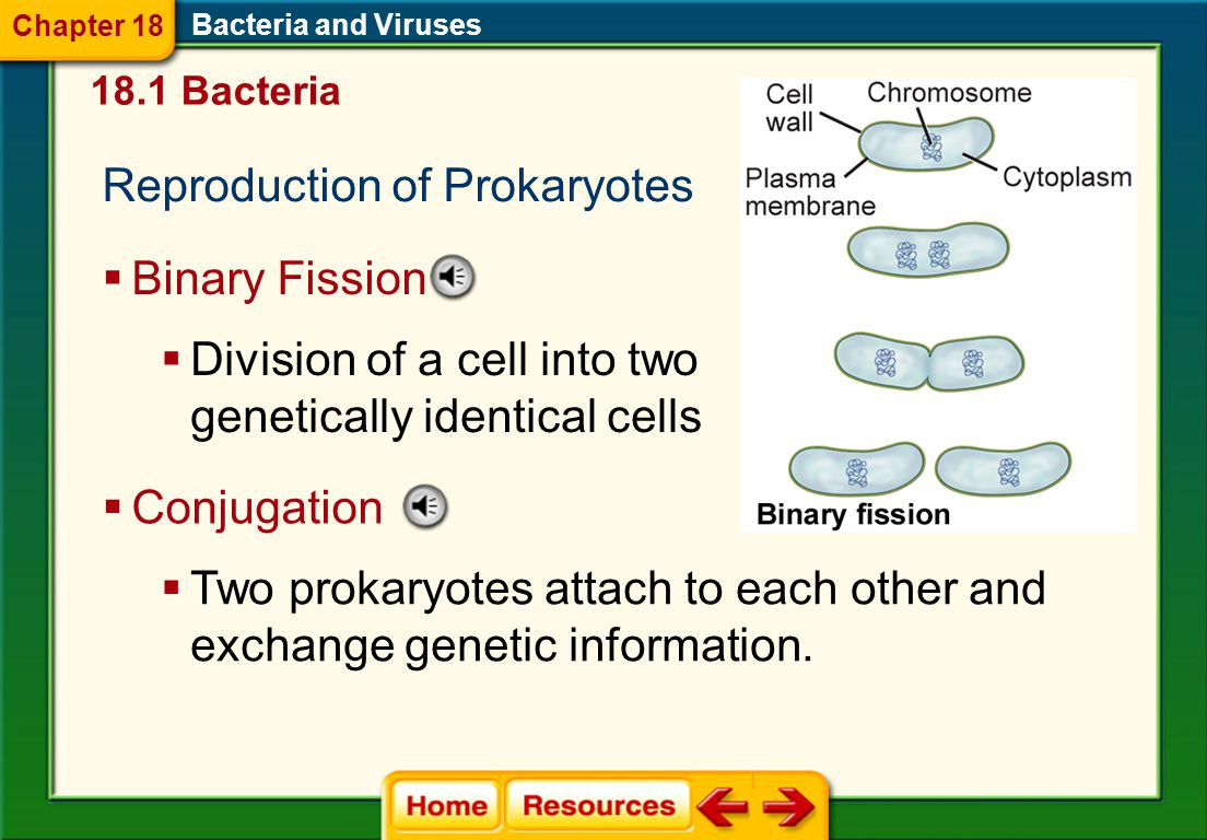 Reproduction of Prokaryotes
