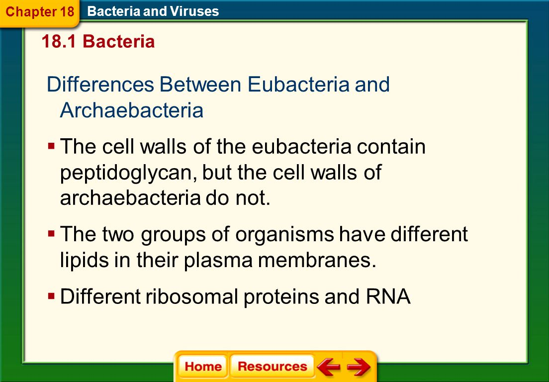Differences Between Eubacteria and Archaebacteria
