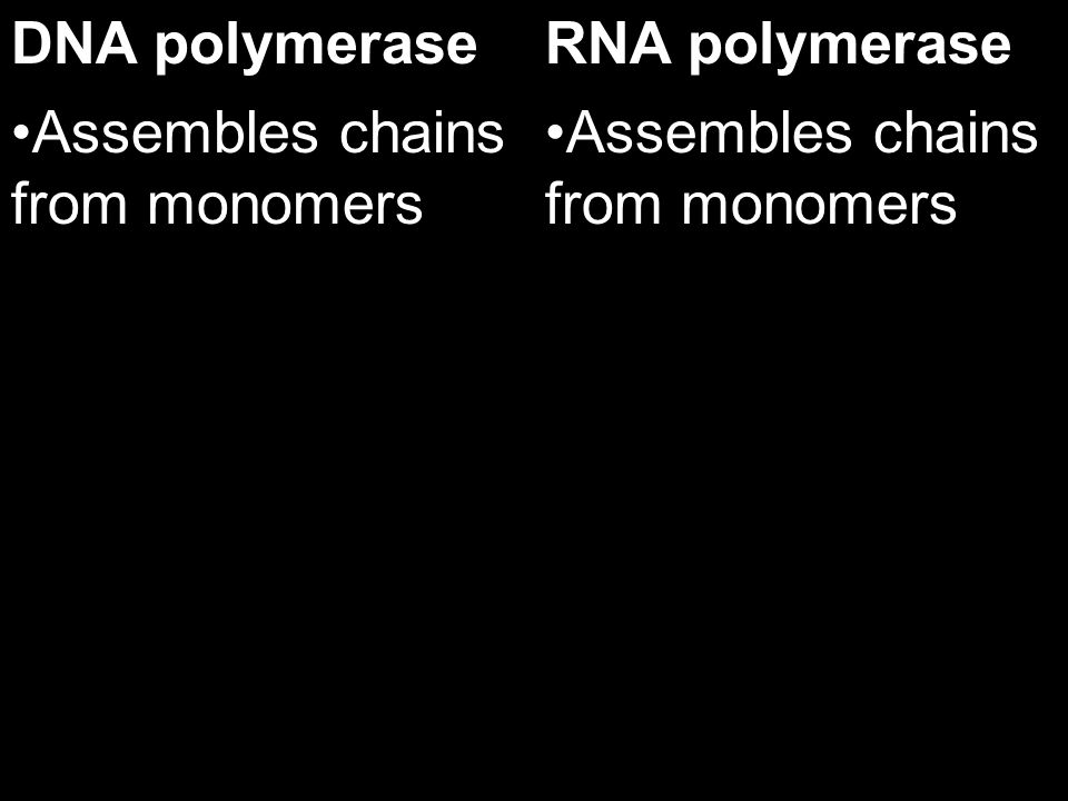 DNA polymerase Assembles chains from monomers RNA polymerase Assembles chains from monomers