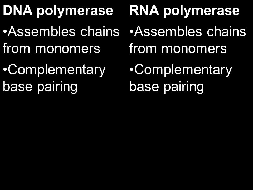 DNA polymerase Assembles chains from monomers. Complementary base pairing. RNA polymerase. Assembles chains from monomers.