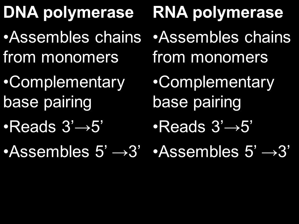 DNA polymerase Assembles chains from monomers. Complementary base pairing. Reads 3'→5' Assembles 5' →3'