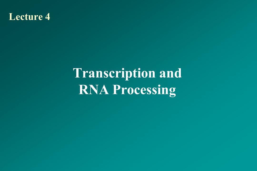 Transcription and RNA Processing