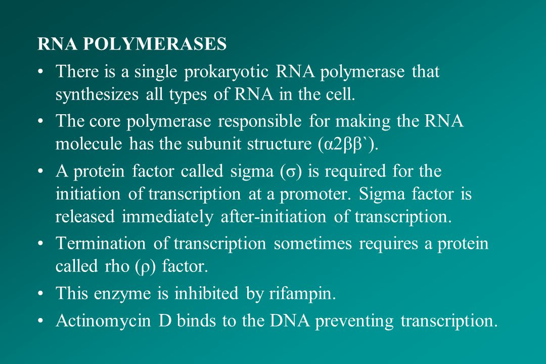 RNA POLYMERASES There is a single prokaryotic RNA polymerase that synthesizes all types of RNA in the cell.