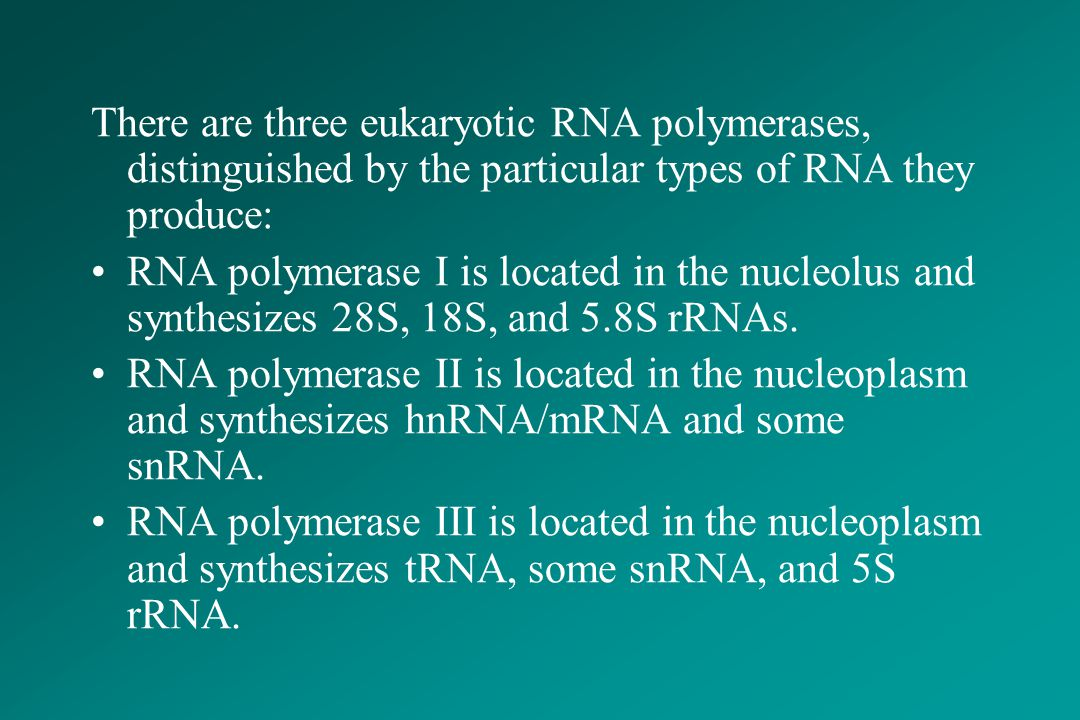 There are three eukaryotic RNA polymerases, distinguished by the particular types of RNA they produce: