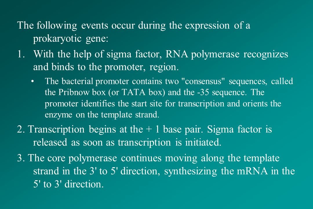 The following events occur during the expression of a prokaryotic gene: