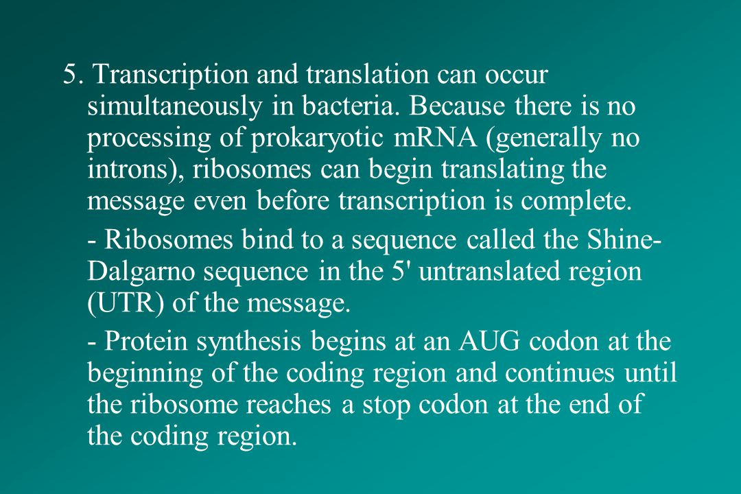 5. Transcription and translation can occur simultaneously in bacteria