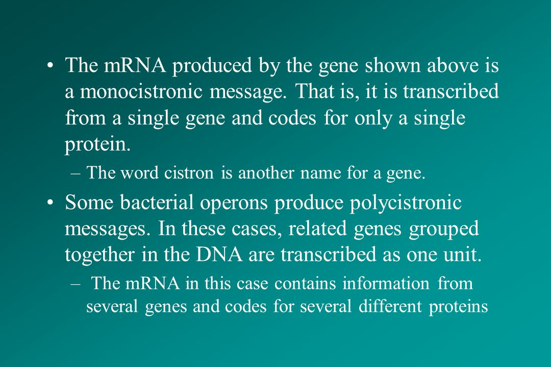 The mRNA produced by the gene shown above is a monocistronic message