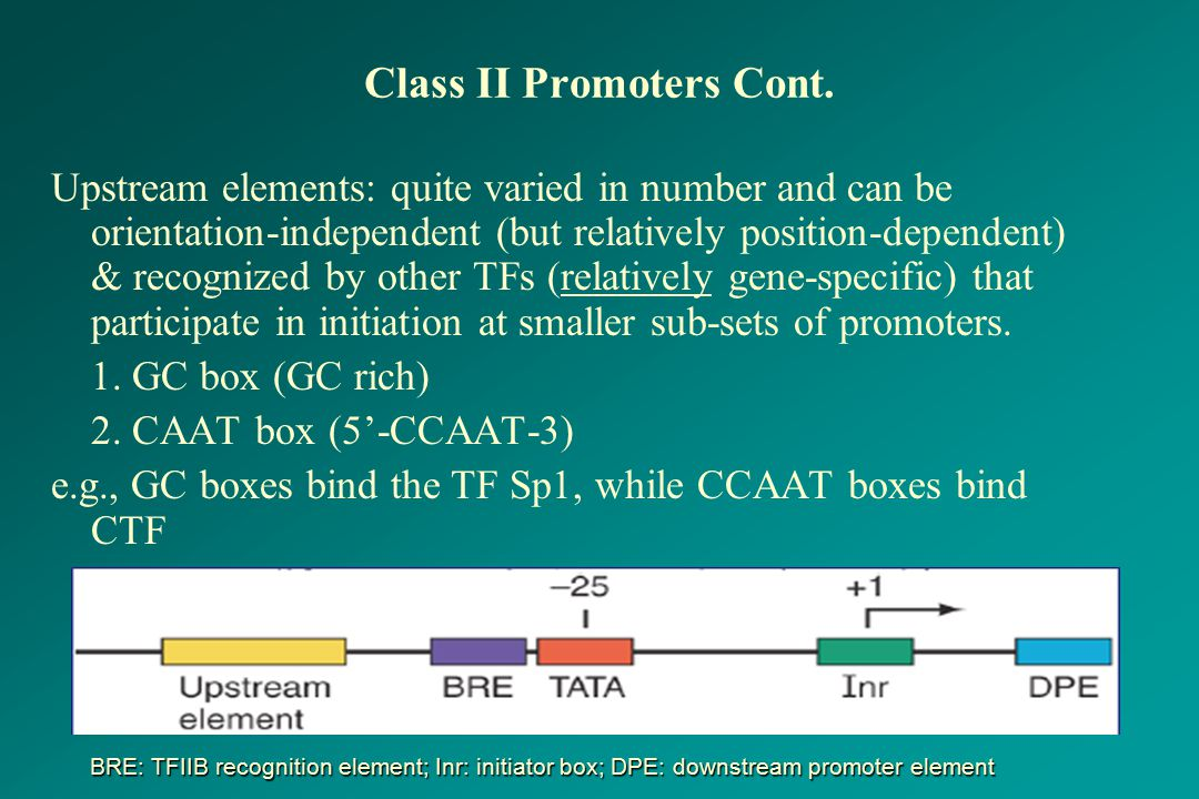 Class II Promoters Cont.