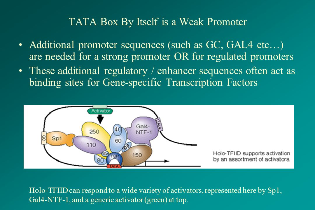 TATA Box By Itself is a Weak Promoter