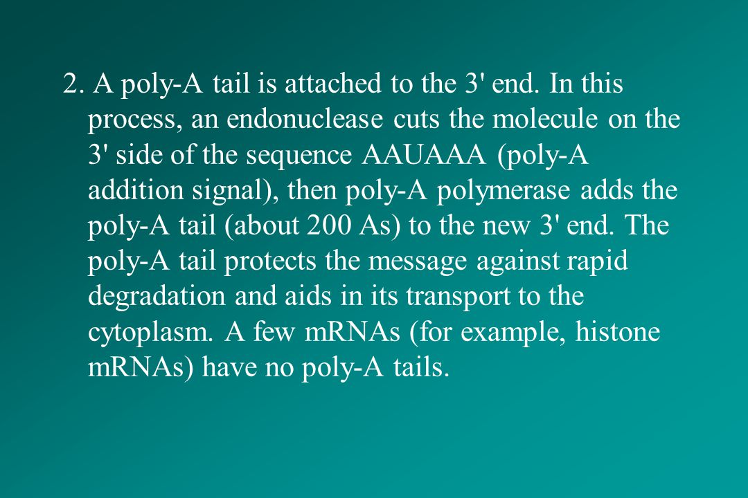 2. A poly-A tail is attached to the 3 end
