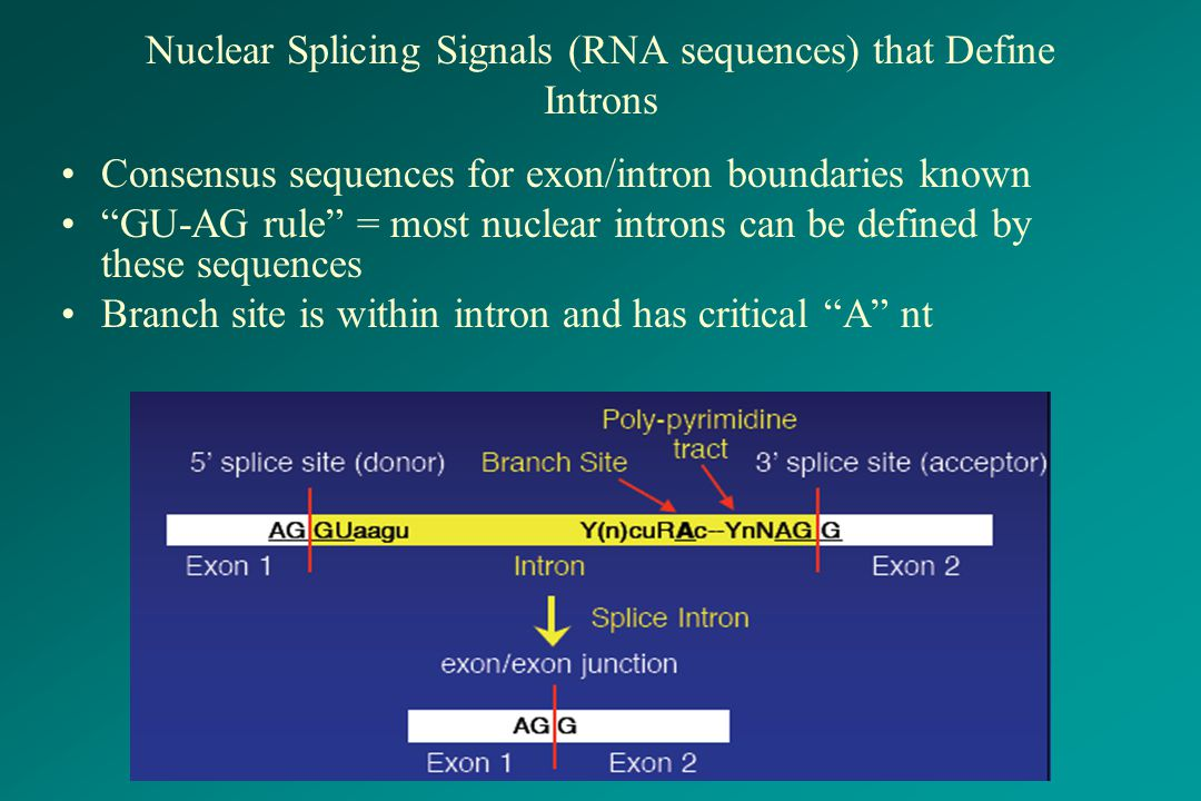 Nuclear Splicing Signals (RNA sequences) that Define Introns