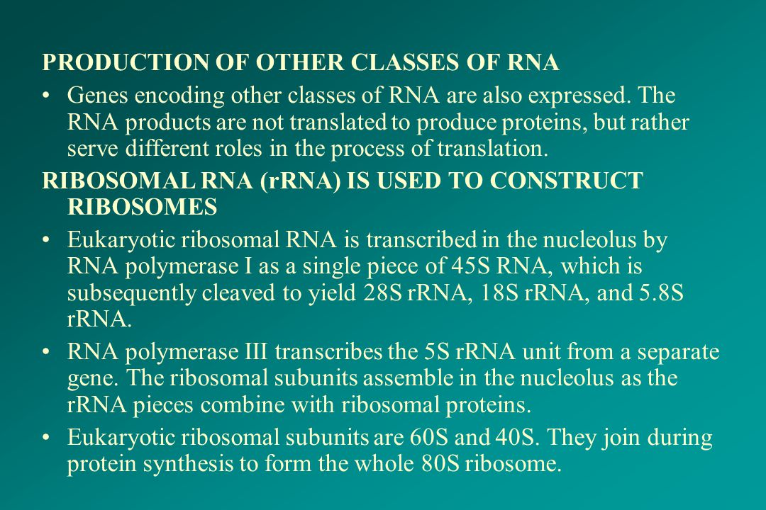 PRODUCTION OF OTHER CLASSES OF RNA