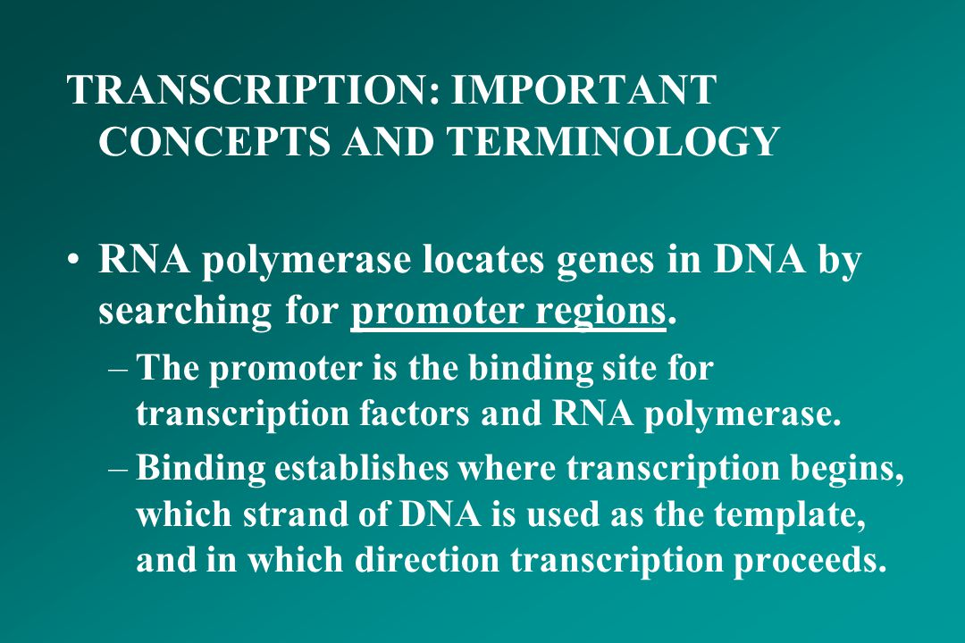 TRANSCRIPTION: IMPORTANT CONCEPTS AND TERMINOLOGY