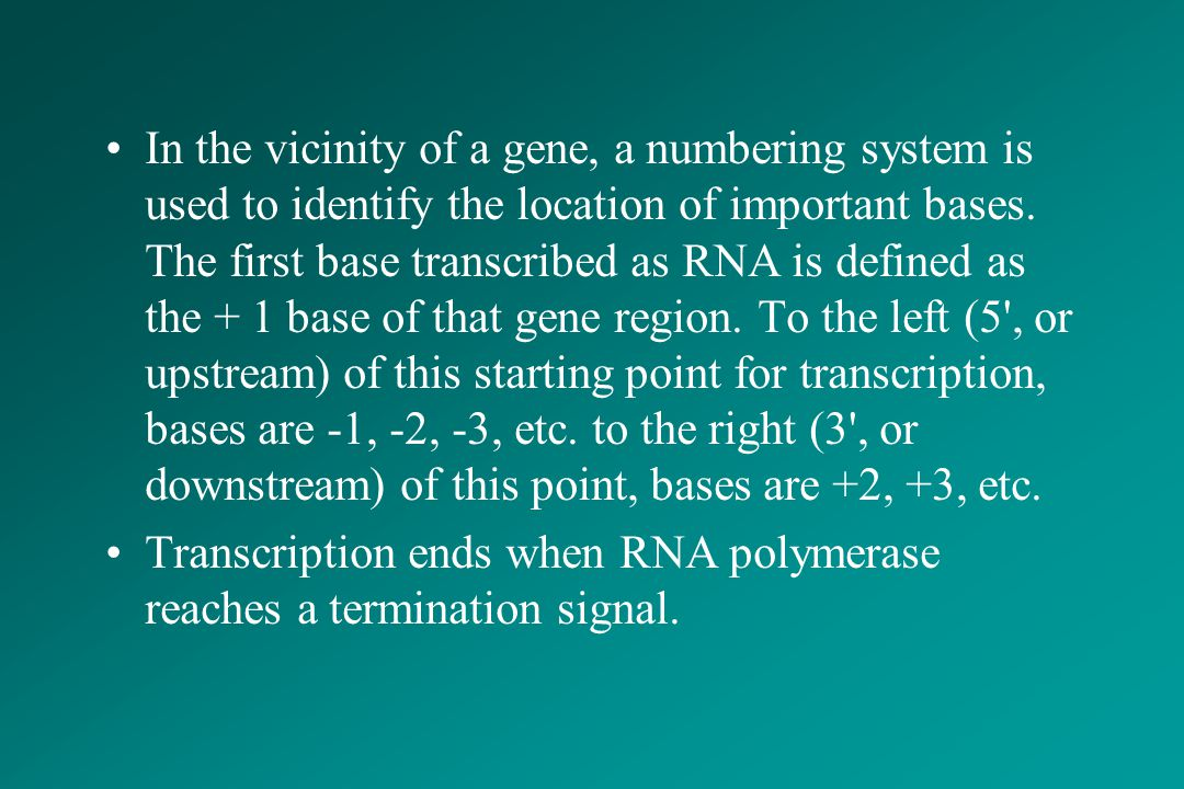 In the vicinity of a gene, a numbering system is used to identify the location of important bases. The first base transcribed as RNA is defined as the + 1 base of that gene region. To the left (5 , or upstream) of this starting point for transcription, bases are -1, -2, -3, etc. to the right (3 , or downstream) of this point, bases are +2, +3, etc.